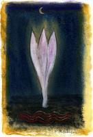 Nachtblüte